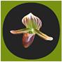 Orchidee91-logo