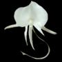 amateur-orchidee-logo