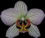 orchidee93-logo