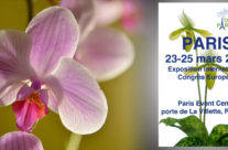 Orchidées Paris – mars 2018