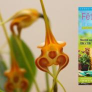 Fête de la fleur et des jardiniers